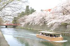 平安神宮のお堀の桜と屋形船の画像011