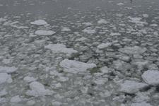 網走の流氷の画像016