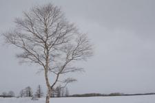 中標津の雪原の画像010
