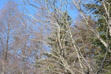八ヶ岳の冬の森