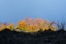 高の瀬渓の紅葉の画像001