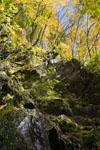 高の瀬渓の紅葉の画像002