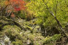 高の瀬渓の紅葉の画像008