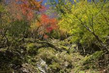 高の瀬渓の紅葉の画像009