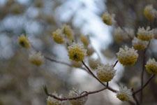 井の頭恩賜公園の桜と夕焼けの画像004