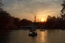 井の頭恩賜公園の桜と夕焼けの画像010