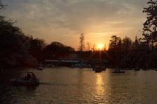 井の頭恩賜公園の桜と夕焼けの画像011