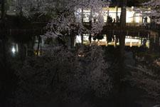 井の頭恩賜公園の満開の夜桜の画像002
