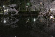 井の頭恩賜公園の満開の夜桜の画像003