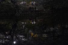 井の頭恩賜公園の満開の夜桜の画像008