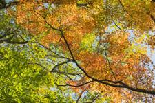 小豆島の紅葉の画像011