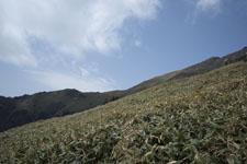 笹ヶ峰の冬山の画像001
