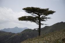 笹ヶ峰の冬山の画像002