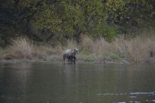アラスカのグリズリーの画像139