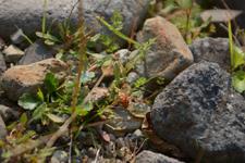 知床半島のクモの画像001