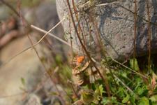 知床半島のクモの画像003