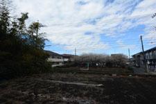 白梅の咲く畑の画像002