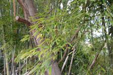 竹林の画像001