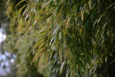 竹林の画像006