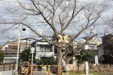 京王井の頭線井の頭公園駅の踏切の画像005