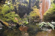 井の頭動物園のトノサマガエル