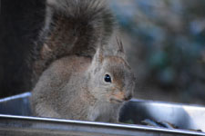 井の頭動物園のリスの画像002