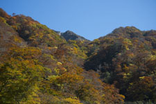 大山の紅葉の画像001