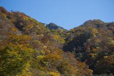 大山の紅葉の画像002