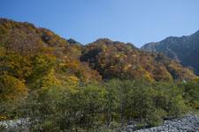 大山の紅葉の画像003