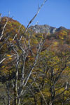 大山の紅葉の画像004