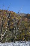 大山の紅葉の画像005
