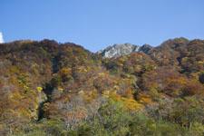 大山の紅葉の画像006