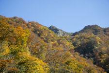 大山の紅葉の画像011