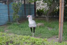 上野動物園のヘビクイワシの画像002