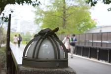 上野動物園の亀のオブジェ