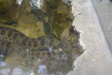 上野動物園のヘビ