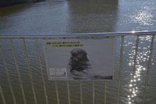 釧路川のクーちゃん