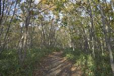 釧路湿原の森の画像001