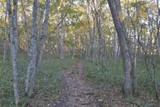 釧路湿原の森の画像002