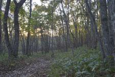 釧路湿原の森の画像003