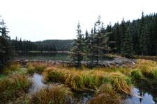 デナリ国立公園の川の画像007