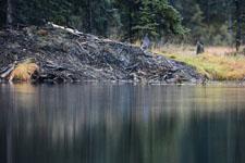デナリ国立公園の川の画像008