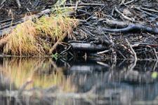 デナリ国立公園の川の画像009