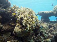 沖縄のサンゴ礁の画像004