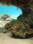 サンゴの下に隠れるギンポの画像001