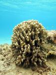 沖縄のサンゴ礁の画像008