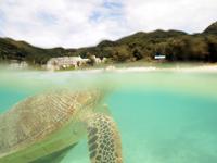 沖縄のアカウミガメの画像015