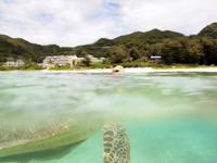 沖縄のアカウミガメの画像016