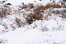 デナリ国立公園の雪の画像001