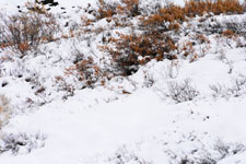 デナリ国立公園の雪の画像002